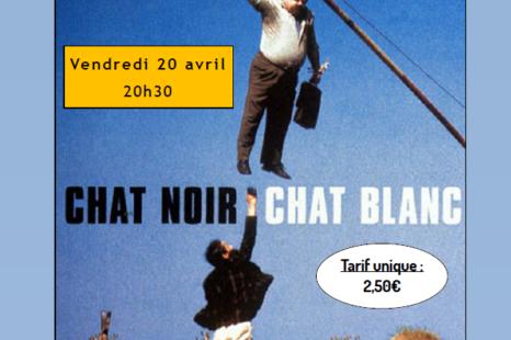 Ciné-débat | CHAT NOIR, CHAT BLANC